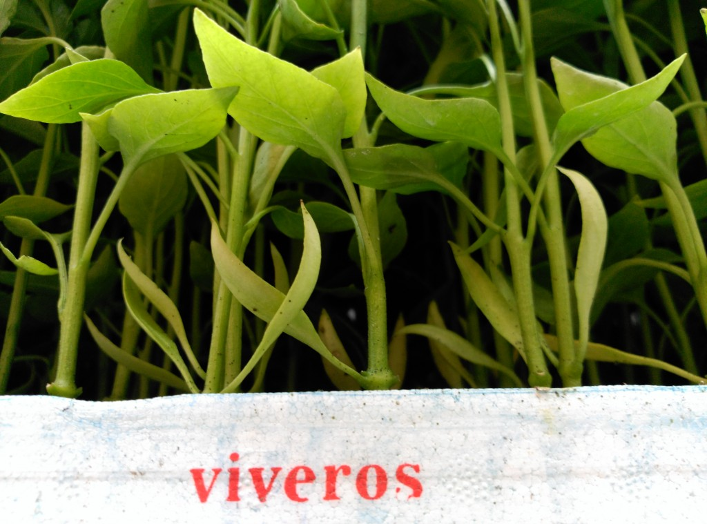Plantas silvestres valiosas y rentables elkarcredit Viveros en girona